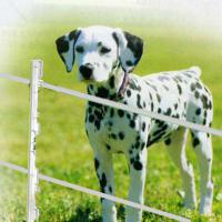 COMPLETE FENCE, LOW VOLTAGE FOR DOGS