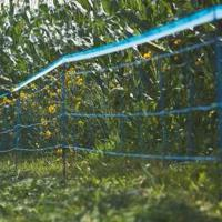 ELECTRIC FENCING FOR BOAR, SWINE and WILD ANIMALS, 50m REEL