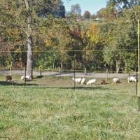 ELECTRIC FENCING FOR SHEEP, 50m REEL